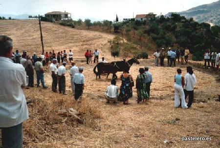Mulos trillando en la Feria de Pastelero 2001