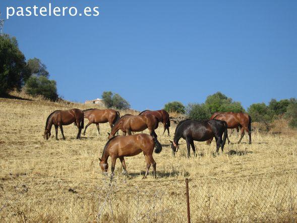 Caballos negros y marrones cerca del Arroyo Coche, entre Villanueva de la Concepción y Casabermeja