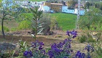 Ya es primavera en Pastelero