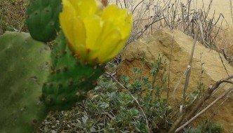 Chumbo con flor