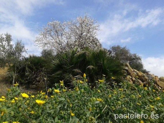 Un invierno que parece primavera, foto del campo en la Barriada Pastelero