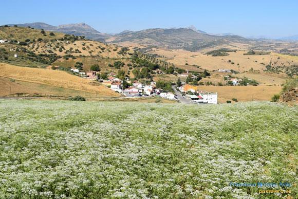 Flores de Primavera en la Barriada Pastelero de Málaga desde el Puerto Subires